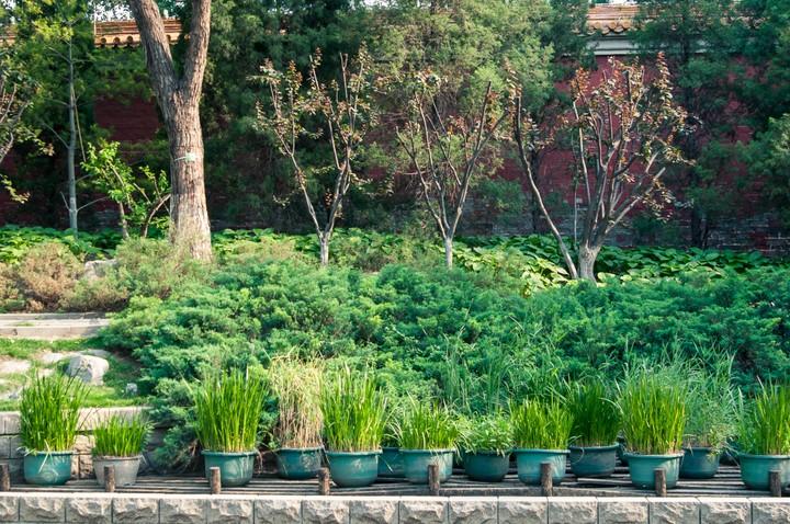 Potted plants in Beijing