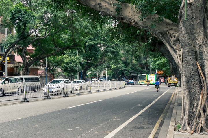 Road covered by trees in Guangzhou