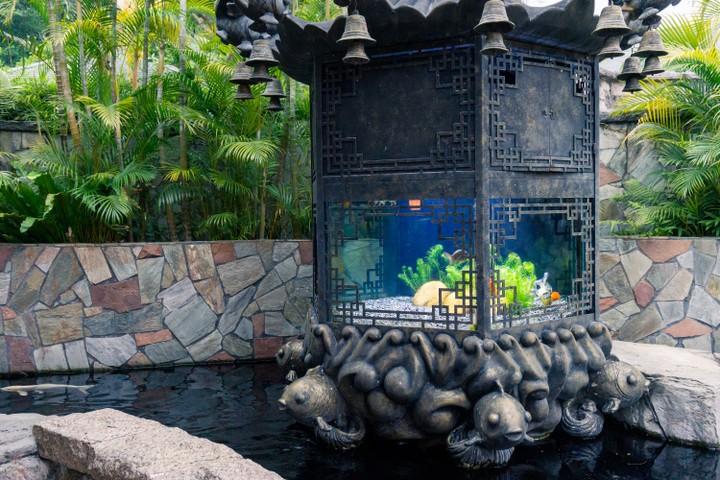 Ocean park fish