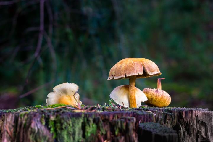 Fall photo of mushrooms