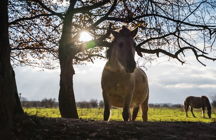 Horse with sun in the background shining through the trees