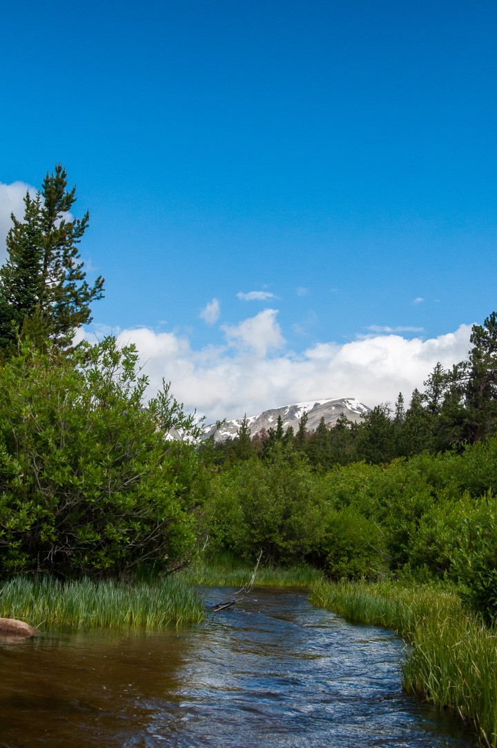 View of stream in Rocky Mountains Nat. Park.