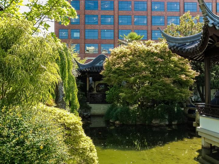 Chinese garden Portland