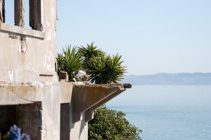 Plants growing everywhere in Alcatraz