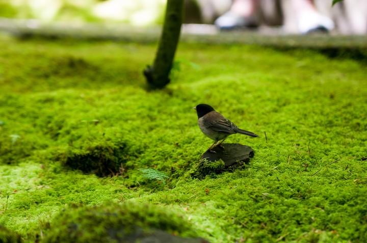 Birds in Japanese Garden in Portland